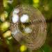 Sunlit Web!