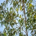 A leafy tree, or is it?