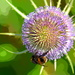 Bee Effect