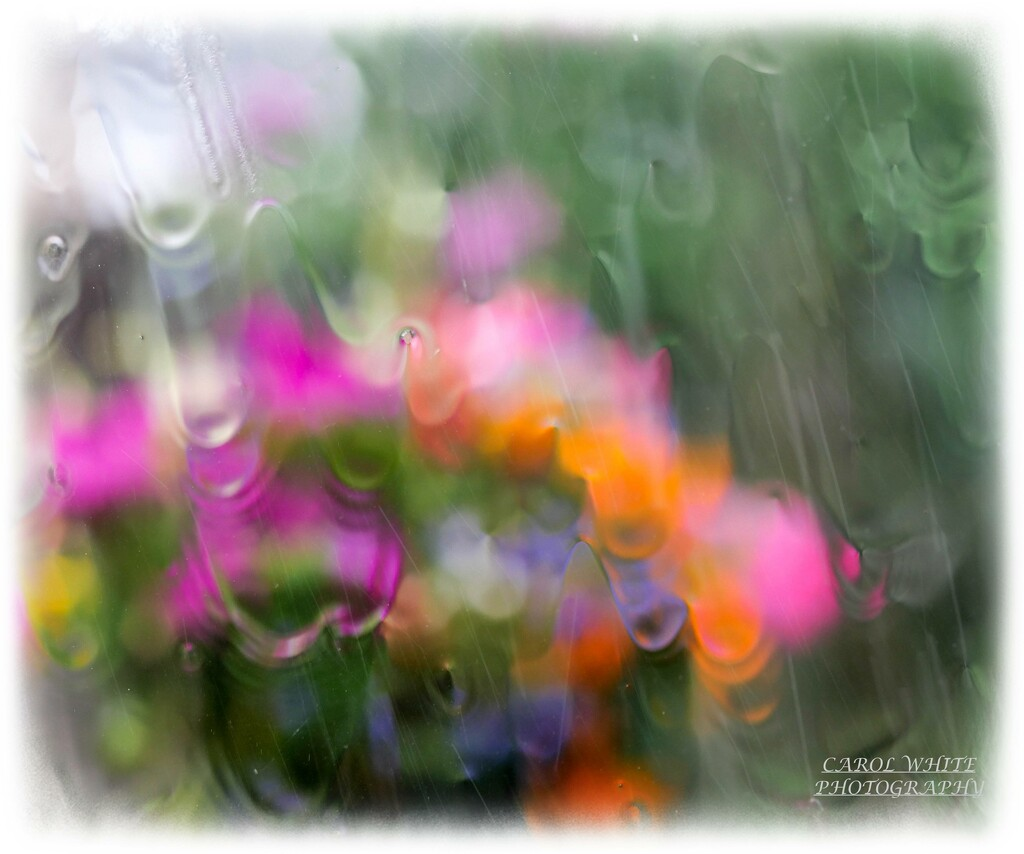 Height Of The Storm(hanging basket through our conservatory window) by carolmw