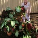 Sue and her caladiums