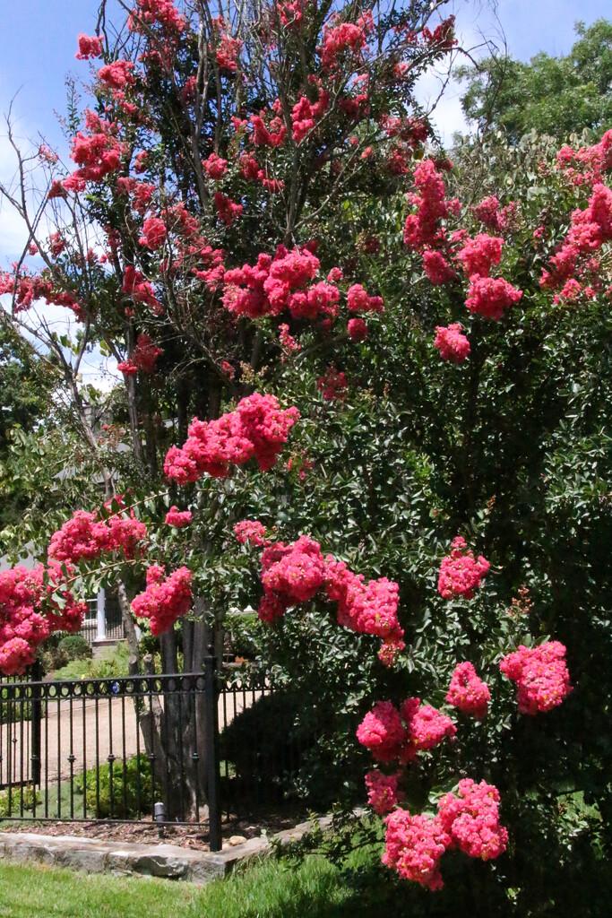 Pretty tree by mittens