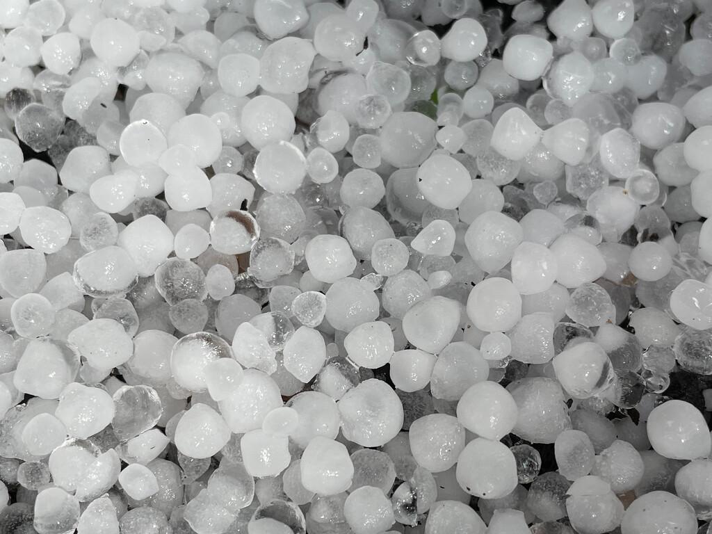 Hail by 365projectmaxine