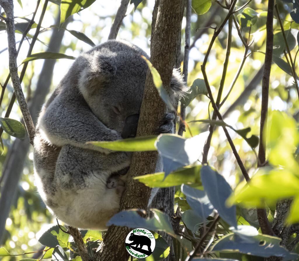 golden slumbers by koalagardens