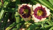 28th Jul 2021 - Garden flowers