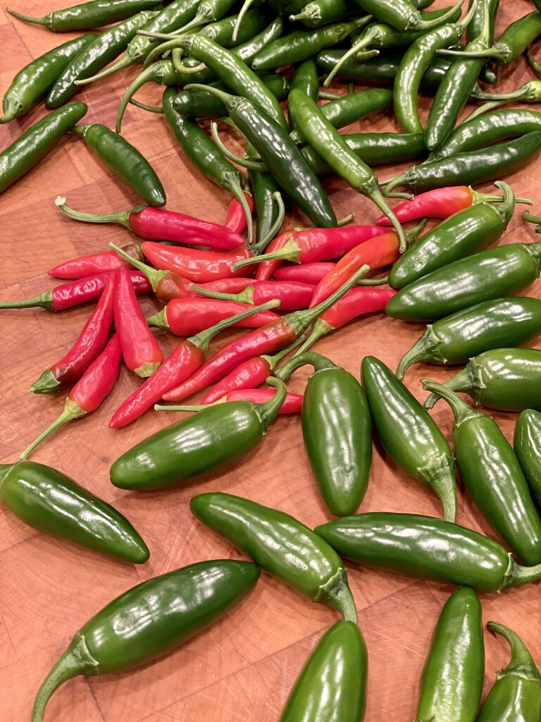 Picked a peck of peppers by samae