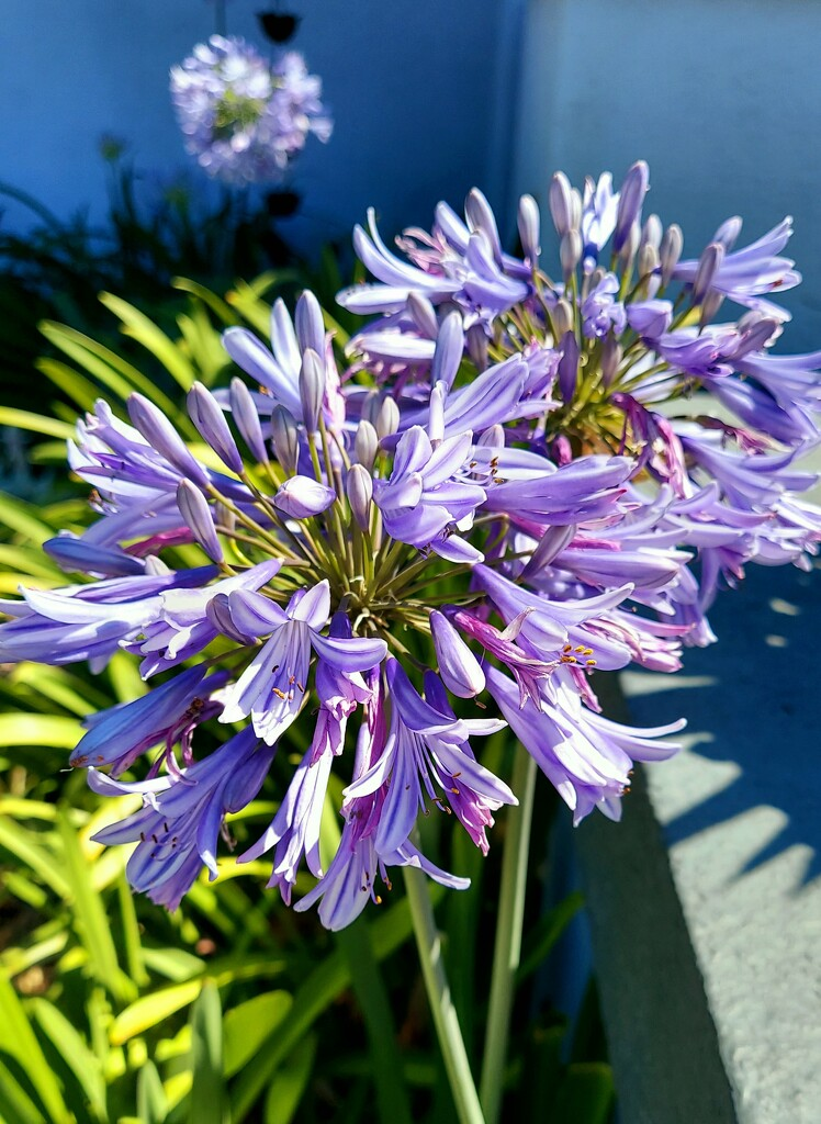 Pretty Purple by harbie