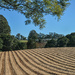 Ploughed fields - Flaxton