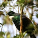 Mr Tui came for a visit by rustymonkey