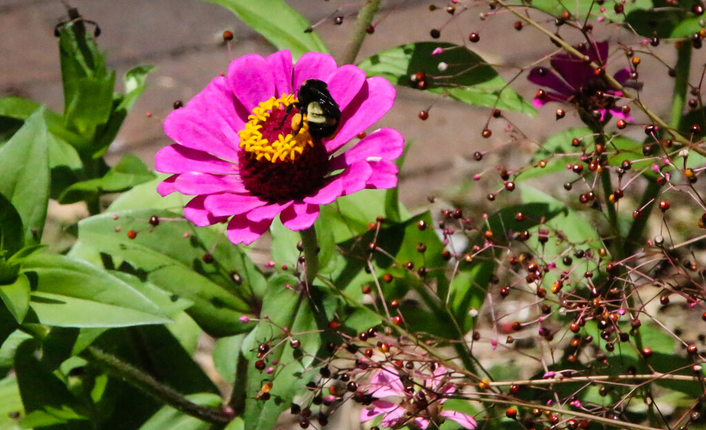 A bee on a flower by mittens