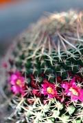 29th Jul 2021 - little flowers