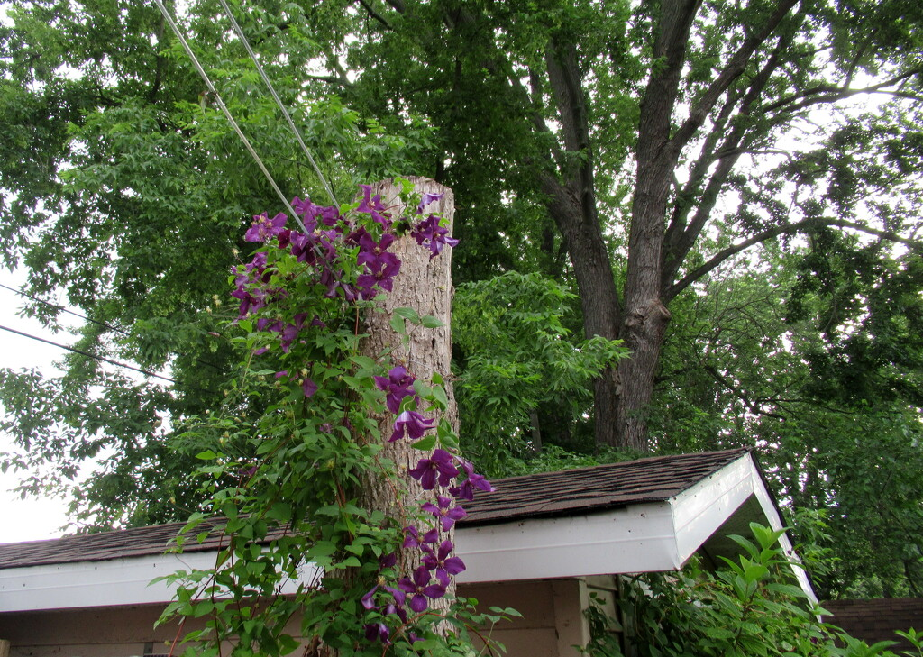 Purple climates takes over by bruni