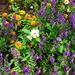 Summer blooms, Hampton Park Garden