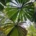 My Fav Palm leaves