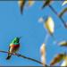 Such a colourful little bird,