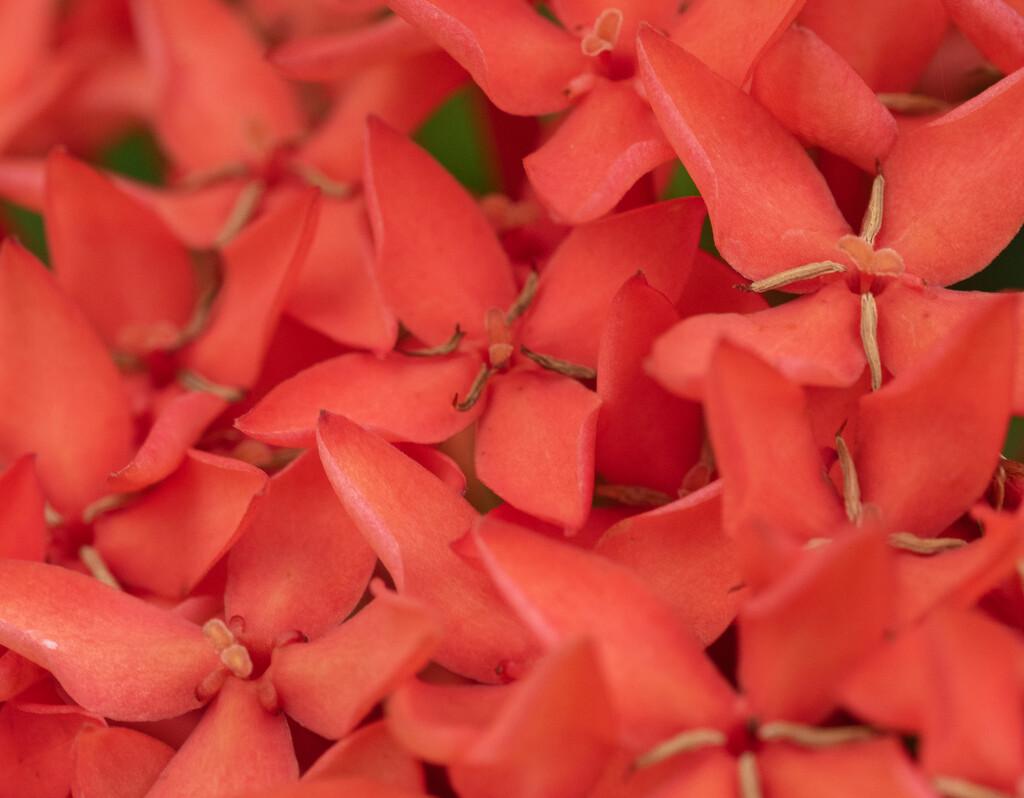 Red Flowers by ianjb21