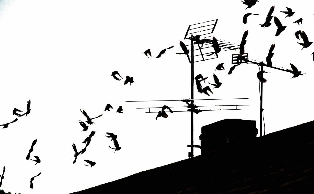 Starlings by moonbi
