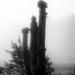 birdhouses in the mist