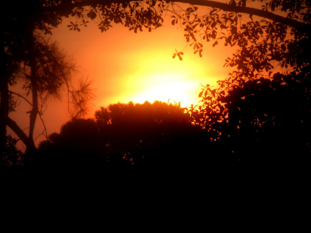 Sultry Summer Sunrise by grammyn