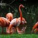 Flamingo Friday - Finally!