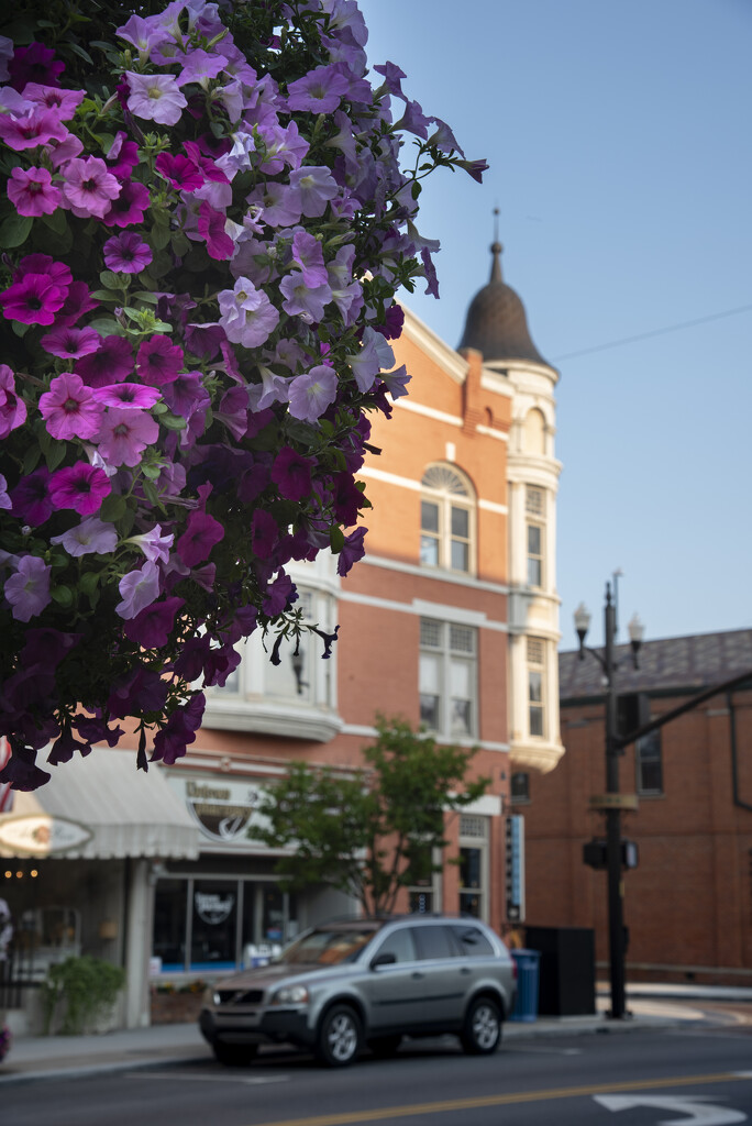Flowers over Holmes Hotel by ggshearron