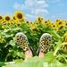 Shoe Happy