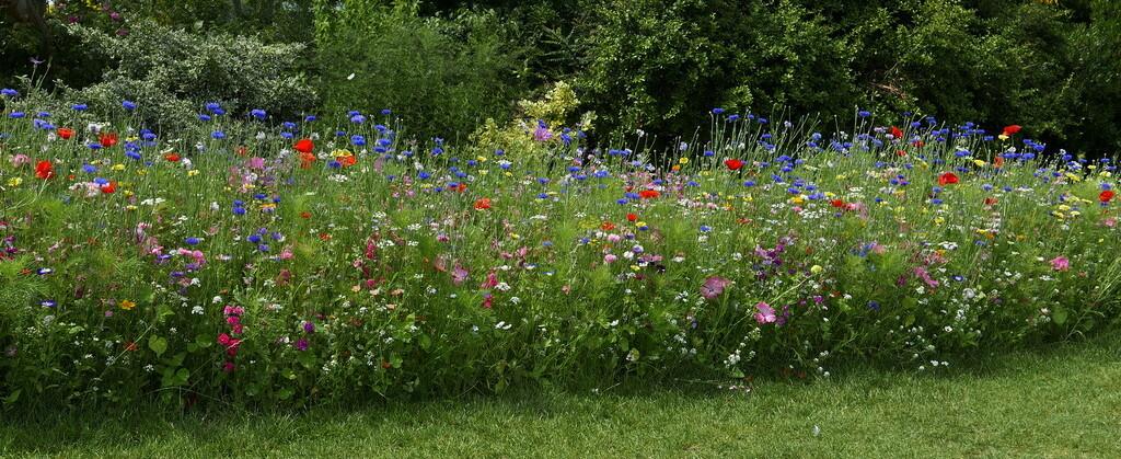 wildflower garden by quietpurplehaze