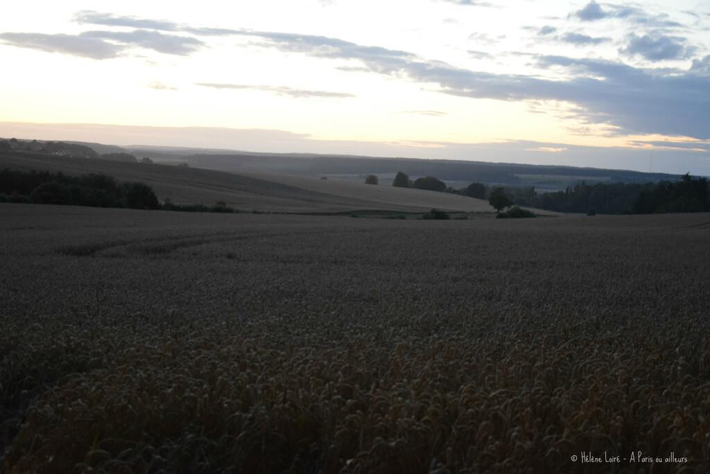 Before the harvest by parisouailleurs