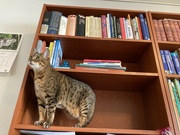 31st Jul 2021 - Books and cats