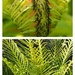New frond deep in the centre is this new frond