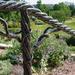 Grapevine railing jpg