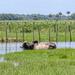 Adventure in the Everglades