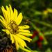 Pollinators at Work by cwbill