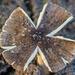 Fungi top...