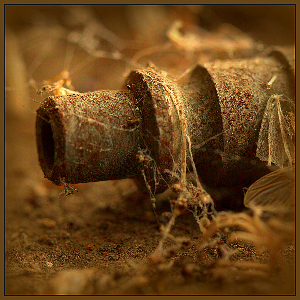 Cobwebs and dead bugs by dide