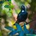 The curious bird