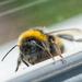 A model bee