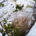 Webworm nest...