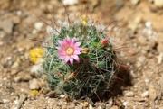 31st Jul 2021 - fishhook cactus