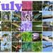 I enjoyed July