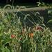 A garden of grass