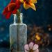 Bokeh, Bottle and Blooms by 30pics4jackiesdiamond