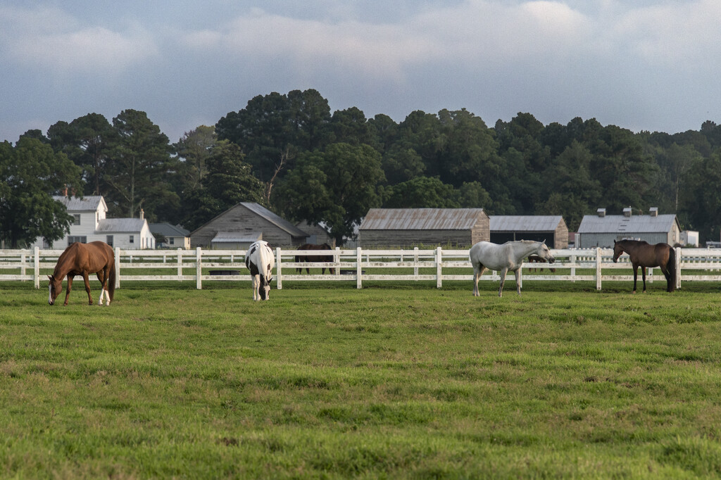 Horse Farm by timerskine