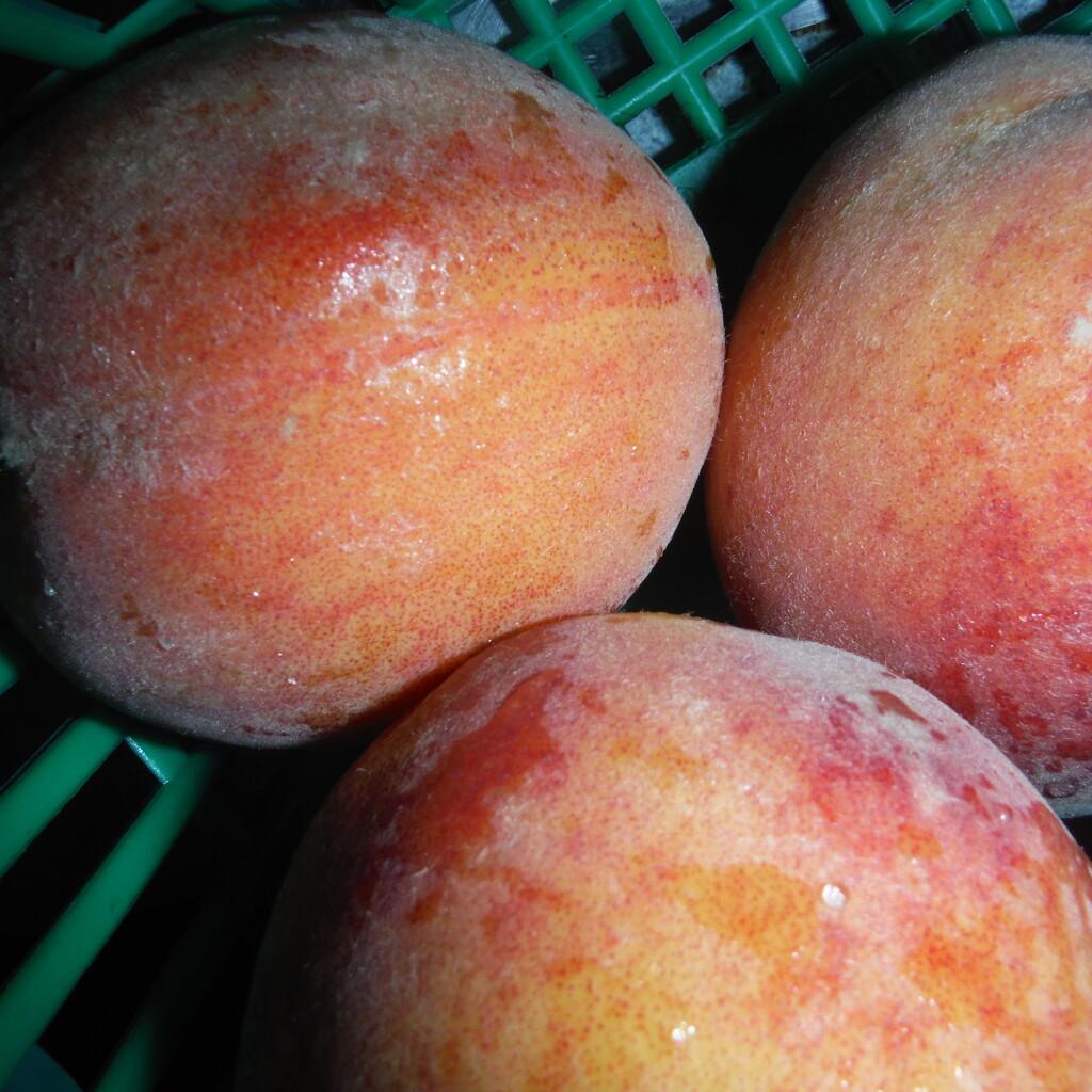 Peach Month by spanishliz