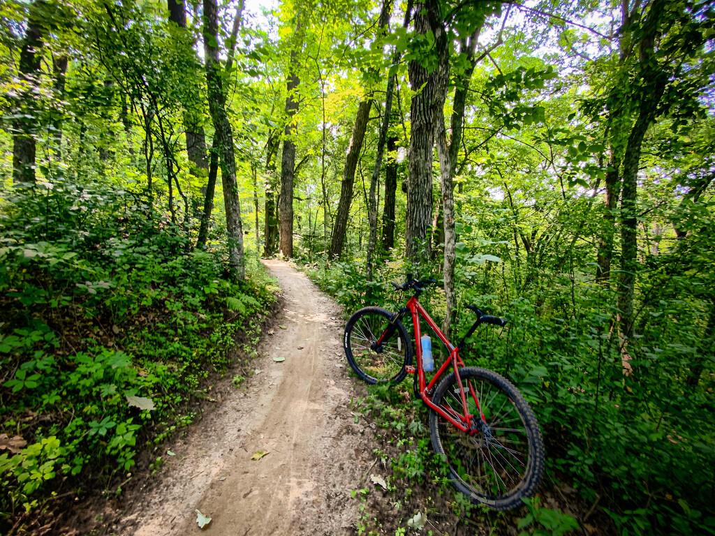 Lowes Creek Trail mountain biking by jeffjones