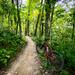 Lowes Creek Trail mountain biking
