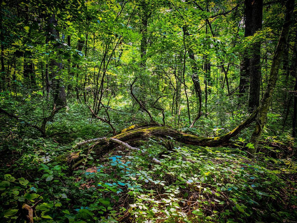 Fallen tree by jeffjones