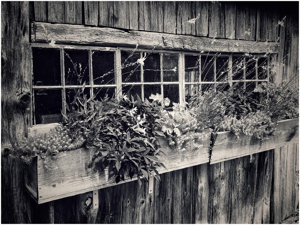 Scene from the Berkshire Botanical Garden by jakb