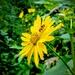Boston Arboretum Bee Heaven