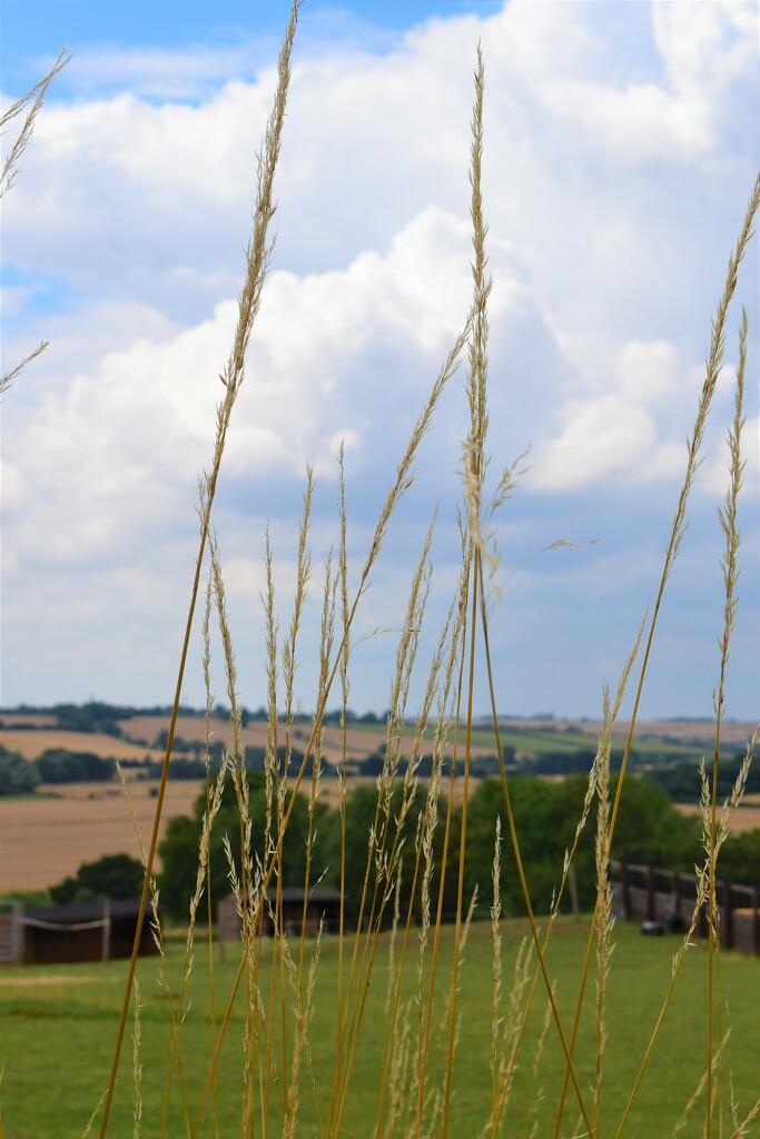 The rolling hills of Cambridgeshire!! by 365anne